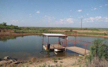 Fishing Tank