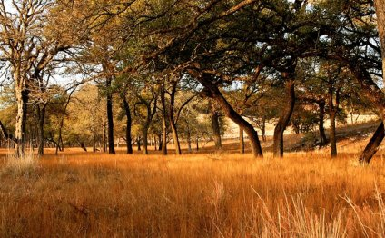 Texas Hill Country Ranches