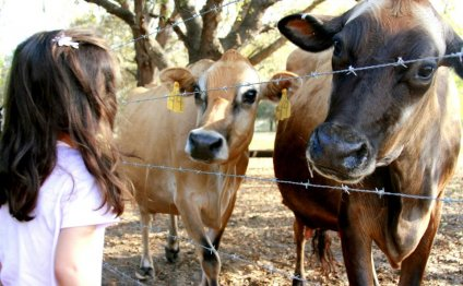 Pasteurized Organic milk