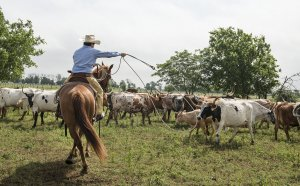 Cattle Ranch Jobs in Texas