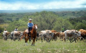 Ranching in Texas