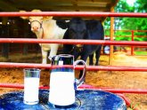 Raw milk Houston